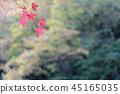 静冈市 枫树 枫叶 45165035