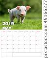 Piglet in grass. Calendar 2019 year 45166277