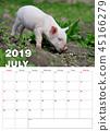 Piglet in grass. Calendar 2019 year 45166279