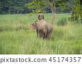 animal elephant forest 45174357