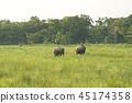 animal elephant forest 45174358