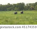animal elephant forest 45174359