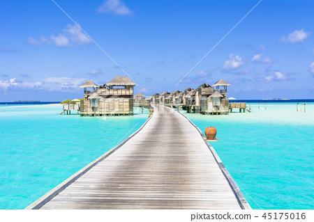 美丽的珊瑚礁海洋在印度洋 45175016