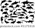 โลมา,ปลา,ฉลาม 45175916
