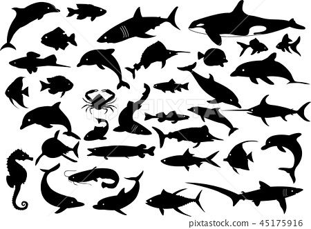 35 vector dolphins sharks whales and fishes 45175916
