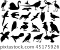 birds silhouettes collection 45175926