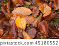 autumnal leaves falling on the floor  45180552