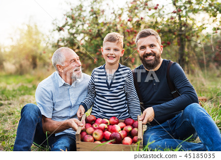 A small boy with father and grandfather sitting in apple orchard in autumn. 45185035