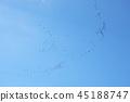 ท้องฟ้าเป็นสีฟ้า,นก,ท้องฟ้า 45188747