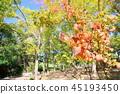 가을의 공원 가막살 단풍 45193450