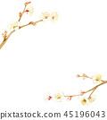 ume, japanese apricot flower, an ume flower 45196043
