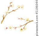 ume, japanese apricot flower, an ume flower 45196044