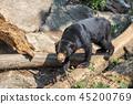 bear, animal, wildlife 45200769