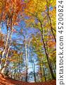 fall, autumn, rural 45200824