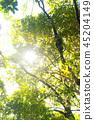 정글 보르네오 섬 45204149