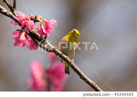 花鳥圖 45204385