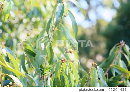가을의 공원 숲 아이 도토리 45204431