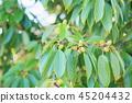 가을의 공원 숲 아이 도토리 45204432