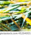 Spider 45204955