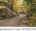Empty road in the autumn forest 45205348