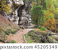 Hiking trail in the autumn forest 45205349