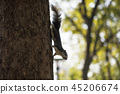 squirrel on tree with bokeh background 45206674