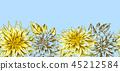 flower, dahlia, daisy 45212584