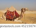 낙타와 피라미드 45215674