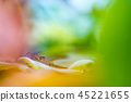 spider on a water plant 45221655