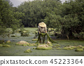 Cultures of Mekong river freshwater  45223364