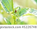 잎에 띄는 무당 벌레 45226748