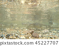 Multiple fish in the water 45227707