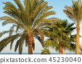 Palm Trees - Coast of the Red Sea Egypt Africa 45230040