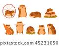 hamster animal character 45231050
