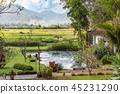 Beautiful garden with pond and foggy mountains  45231290