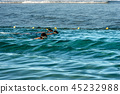 snorkeling, diving, sea 45232988