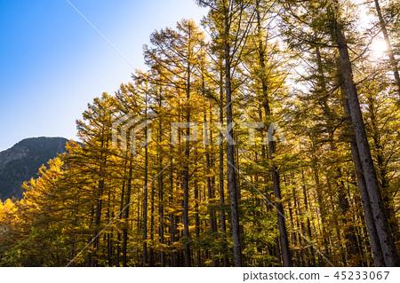 長野長野縣Kamikochi,Karamatsu和北阿爾卑斯山在秋天 45233067