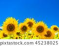 해바라기 여름 이미지 45238025
