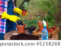 flower transplant  in the garden 45238268