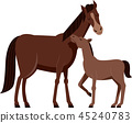 horse, foal, mother 45240783