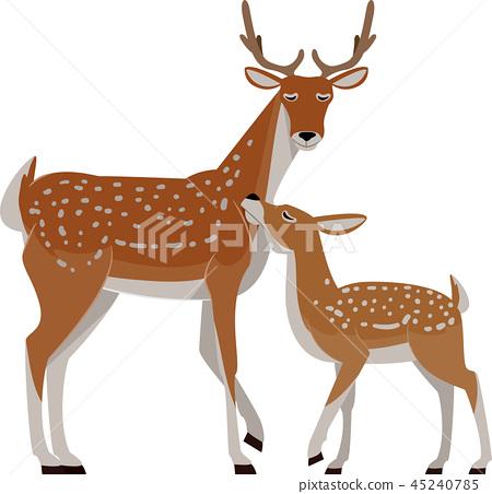 Deer Fawn Illustration 45240785