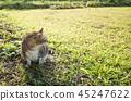 old cat sit 45247622