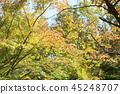 가을의 공원 단풍 나무 단풍 45248707