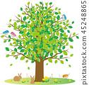 신록 나무 작은 동물 45248865