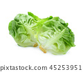 fresh baby cos, green lettuce isolated on white  45253951