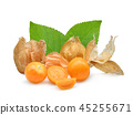 cape gooseberry or physalis isolated on white  45255671