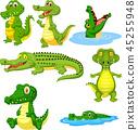 alligator, animal, cartoon 45255948