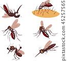 Cartoon mosquito collection set 45257565