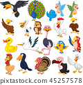 Cartoon bird collection set 45257578