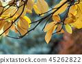 sun light in autumnal leaves in public garden 45262822